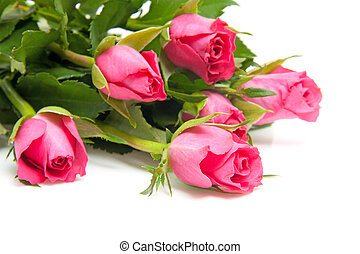 bouquet of pink roses - Bouquet of pink roses in closeup...