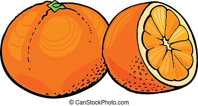oranges - illustration of two oranges