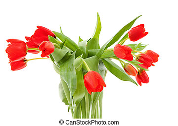 bouquet of red tulips - Bouquet of red tulips over white...
