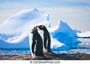 Two penguins dreaming sitting on a rock, glaciers in the...
