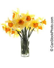 Yellow with orange daffodil flowers in glass vase over white...