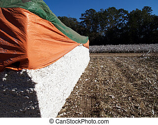 Cotton Module with a cotton field in the background
