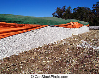Cotton Modules with a cotton field in the background