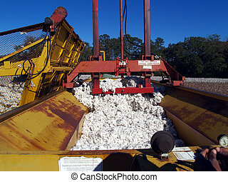 Packing Down the Cotton Module Buil - A cotton module...