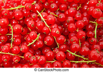 background of red berries
