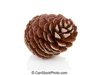One pine cone - One big pine cone isolated on white...