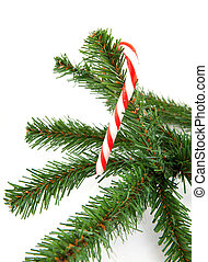 branch of christmas tree with candycane over white...