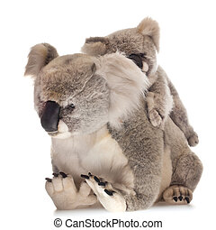 koalabear - mother and young koalabear on white background