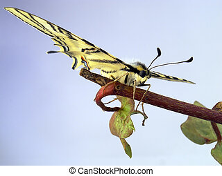 Butterfly put on a branch with leaves
