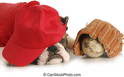 sports hound - english bulldog wearing red shirt and hat...