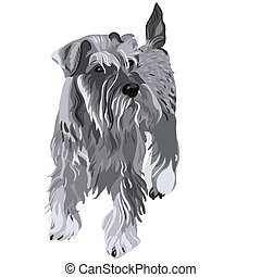 vector Miniature Schnauzer dog - dog breed Miniature...