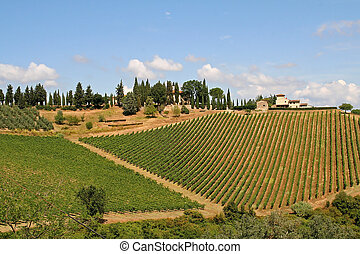 Landscape with vineyard in the Tuscany, Italy, on sunny day