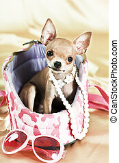 the smallest breed of dog - Funny Chihuahua puppy The...