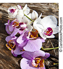 A branch of orchids on a wooden board