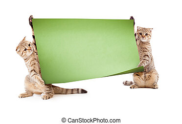 Two kittens with placard or banner for your text