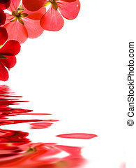 Red flowers reflecting over white background
