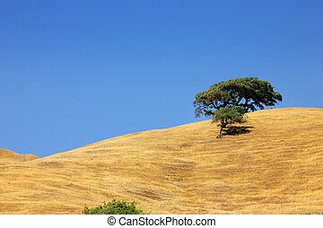 Lone tree on a hill under clear blue sky.