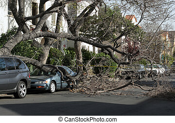 Car trapped under fallen tree after wind storm. Los Angeles,...