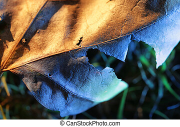Fallen leaf, close-up. Shallow DOF.