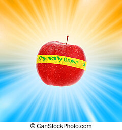 Ripe red organic apple over shiny burst background Shallow...