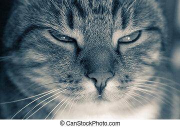 Tomcat portrait, shallow DOF.