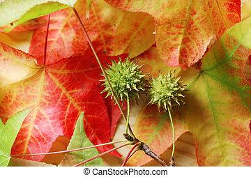 caído, Outono, folhas, fundo