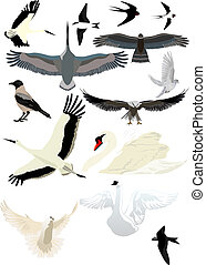 Birds - Collection of different birds for the design of your...