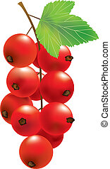 Vector red currant - Bunch of red currant Ripe berry Vector...
