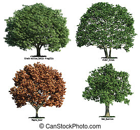 set of trees isolated on white - set of four trees isolated...
