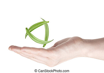 woman's hand holding green leaf
