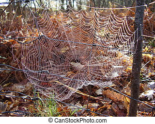Web of European Garden Spider