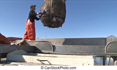 Dumping the Halibut bucket - This position on the fish dock...