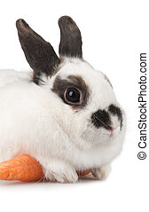 rabbit - white rabbit with blask spots