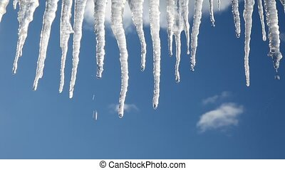 Icicles - Thawing icicles dripping with deep blue winter sky...