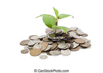 Shoot growing from pile of coins