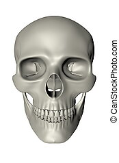 Human Skull - Front View - rendered image of a human skull -...