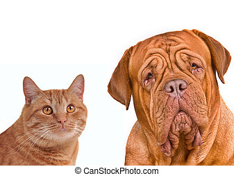 Close-up portrait of brown cat and dog - Close-up portrait...