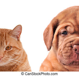Cat and Dog - half of muzzle close up portraits isolated on...