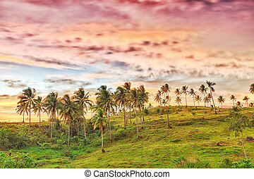Rural landscape at sunset time Donsol Philippines