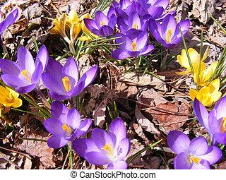 wiosna, ma, Resorowany