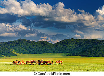 Mountain landscape with grazing horses at sunset