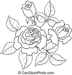 Flowers roses, contours - Flowers roses, vector, buds and...