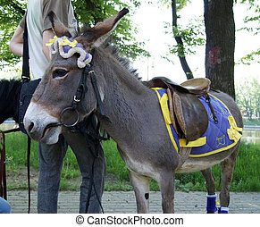 Donkey - The beautiful pet, requires leaving and loves...
