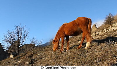 Horse grazing in the mountains on a blue sky background (Full HD)