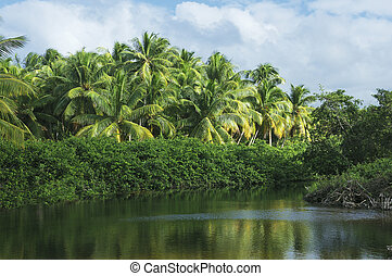 exotic landscape - View of a clearing in a tropical jungle...