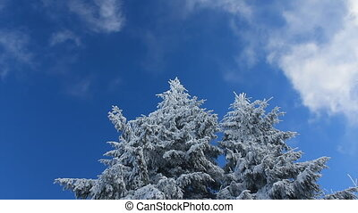White clouds passing by in blue sky over winter forest
