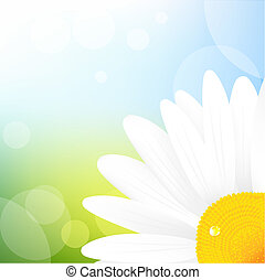 Camomile And Blue Sky, Vector Illustration