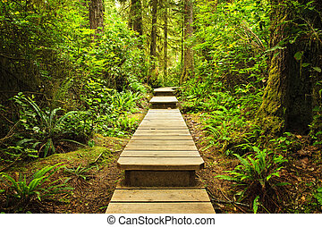 Path in temperate rainforest - Wooden path through temperate...