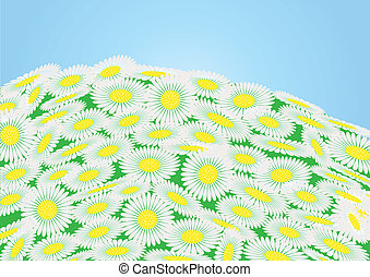 Green field with chamomile flowers and blue sky, vector...