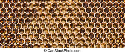 Larvae the future of bees - In the comb are larvae of bees...